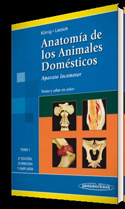 Sisson anatomia de los animales domesticos
